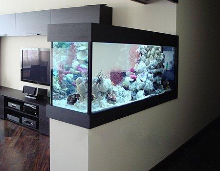 Перегородка в аквариуме фото