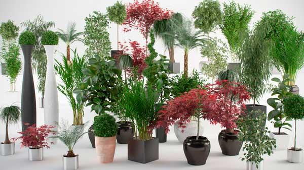 составляем план растительного дизайна